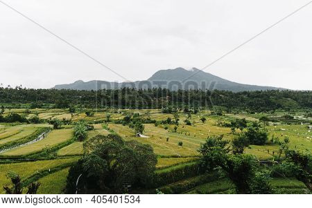 Yellow And Green Rice Terraces With Mountain In Background In Bali, Indonesia.