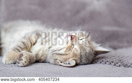 Cute Tabby Kitten Lies On Gray Soft Sofa. Cat Rest On Its Back Napping On Bed. Comfortable Pet Sleep