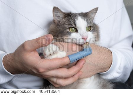 Toothbrush For Animals. Man Brushes Teeth Of A Gray Cat. Animal Care Concept