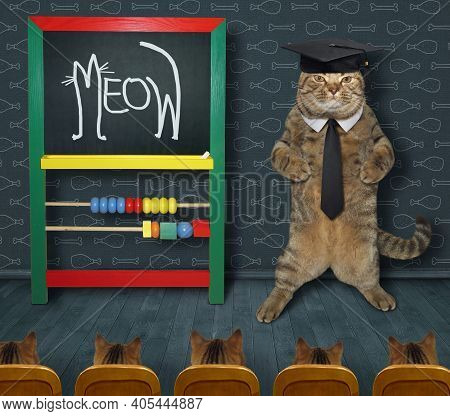 A Beige Cat Teacher In A Tie And An Academic Hat Wrote Meow In Chalk On The Chalkboard.