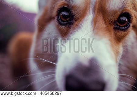 Closeup Of Dog's Nose And Snout In Focus