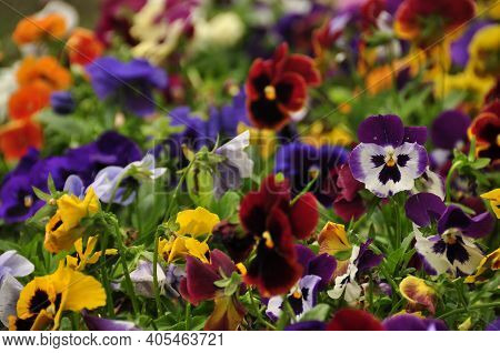 Abundance Of Different Bright Flowers Growing In Lush Bunch. Multicolored Beautiful Flowers In Bunch
