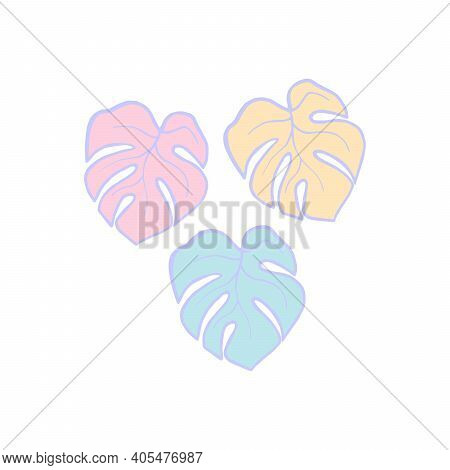 Exotic Plant Leaves Isolate On White Background, Tropical Floral Leaves Hand Draw. Cartoon Monstera