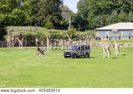 Longleat, Uk - August 26, 2020. Wildlife Seen At Longleat, An English Stately Home And Safari Park.
