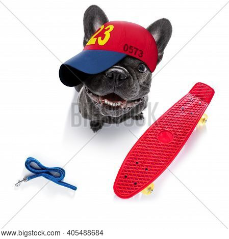 Cool Casual Look French Bulldog Dog Wearing A Baseball Cap Or Hat , Sporty And Fit , Isolated On Whi