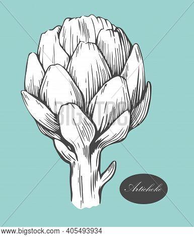 Artichoke Logo. Organic Food. Organic Botanical Design Template. Hand Drawn Vector Illustration