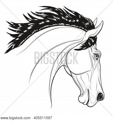 Linear Portrait Of A Stallion Arched Its Neck During A Jump. Head Of A Leaping Horse Pricked Up Its