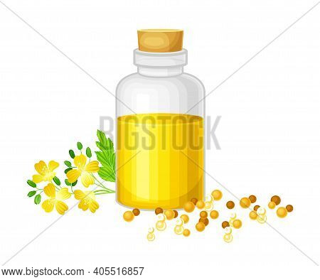 Mustard Oil In Glass Corked Jar With Seeds Scattered Nearby And Plant Specie Vector Illustration