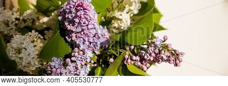 Lilac Bush Over White Background. Lilac Flowers In Garden Or Park. Nature Background, Banner.natural