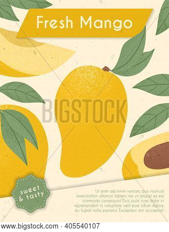 Ripe Mangos With Leaves. Sweet Mango Fruits Vector Hand Drawn Card Design. Mango With Leaf.