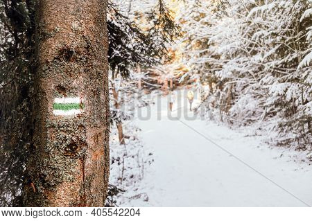 Green Tourist Sign Placed On Wood Log On Meadow. The Trunk Of A Tree With Green Paint Tags. Tree Pla