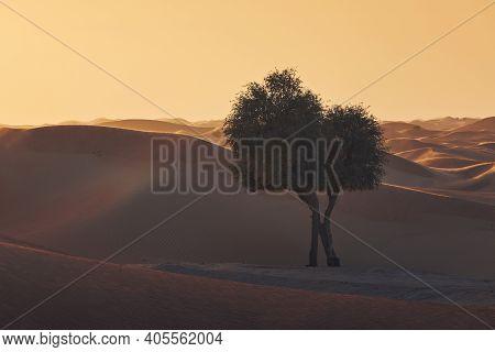 Two Trees In The Middle Of Sand Dunes Against Desert Landscape At Sunset. Abu Dhabi, United Arab Emi