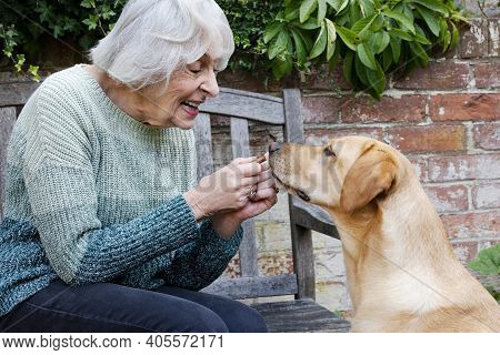Senior Woman Training Pet Dog In Garden With Treat