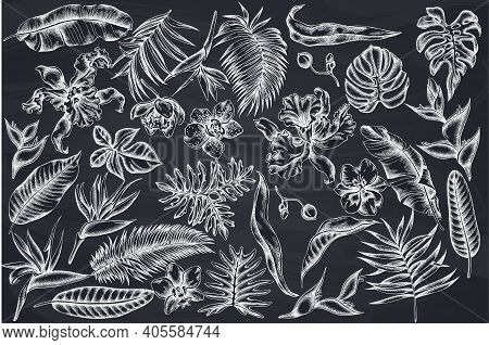 Vector Set Of Hand Drawn Chalk Monstera, Banana Palm Leaves, Strelitzia, Heliconia, Tropical Palm Le