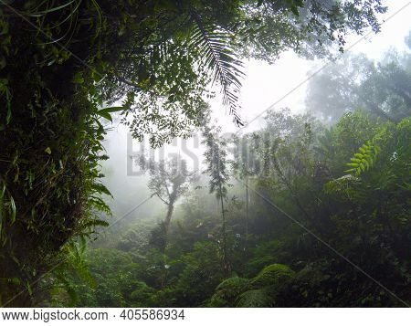 Misty View Of Tropical Jungle And Cloudy Sky. Wild Forest Hiking. Rainforest In Fog, View From Valle
