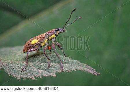 Small Insect Doing Pirouettes On A Leaf 2