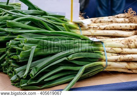 Traditional Seasonal Holiday Of Spring Onion