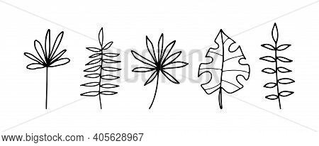 Hand Drawn Decorative Branches With Leaves, Plant Branches, Set Of Branches Design Elements. Vector
