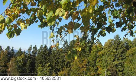 Temperate Broadleaf And Mixed Forest With Conifers And Deciduous Trees