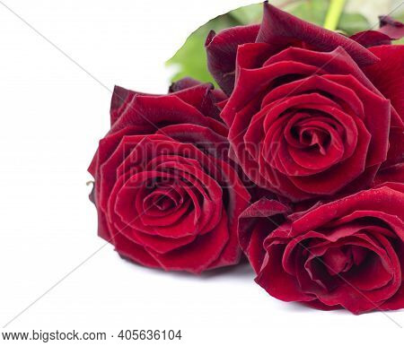 Close Up Of Rose Flower. Beautiful Rose Flower In The Garden. Rose Flower Background. Rose Flower Te