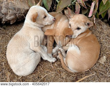 Three Cute Helpless Street Puppies Are Shivering In The Cold And Lying Close To Each Other For Gener