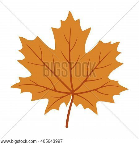Maple Leaf Icon Isolated On White Background From Ecology Collection. Autumn Colors. Maple Leaf Icon