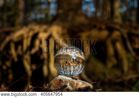 An Inverted Image Of A Tree's Massive Root System Is Visible Through A Lensball.