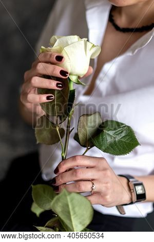 Woman Holds In Her Hands White Rose With Long Stem Close Up Shot