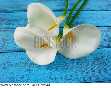 White Calla Lilies Bouquet As Flower Gift Background. Elegant Calla Lilies Flowers On Blue Wooden Ta