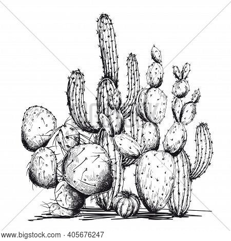 Sketchy Cactus Composition. Hand Drawn Vector Illustration Isolated On White Background.