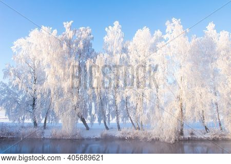 Winter Nature. Scenic Snowy Trees On River Shore In Winter. Frosty Morning Nature Landscape With Cle