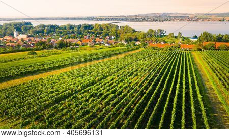South Moravian vineyard near Dolni Vestonice. Traditional viticulture from above. Agricultural workers harvest grapes. Production of quality wines in Czech Republic, Central Europe.