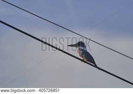 Green Kingfisher, Chloroceryle Americana, Perched On A Cable Along The Transpantaneira To Porto Jofr