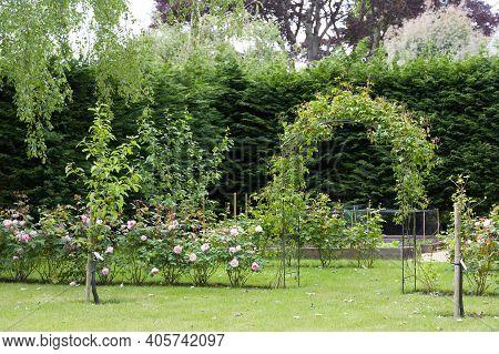 Uk Landscaped Garden With Hedge Roses, Rose Arch And Leylandii Hedge