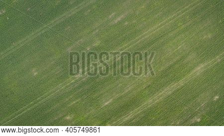 Green Wheat On A Wheat Field. Beautiful View Of Endless Green Agricultural Field On Cloudy Spring Da