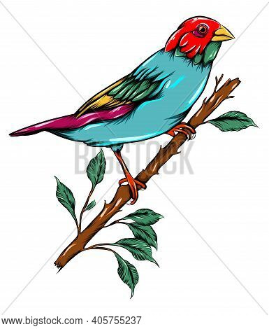 The Colored Of The Bird Perching On The Branch Of The Tree