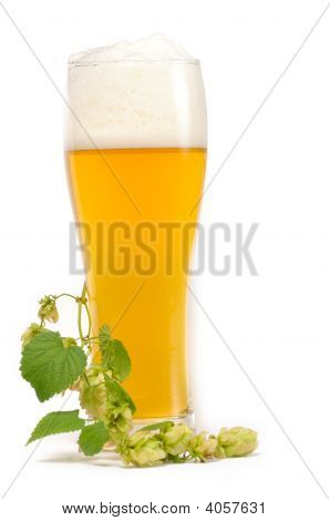 Hop Twig On The Glass With Beer