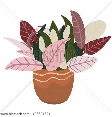 Indoor Plant With Pink Green Leafy In A Clay Pot, Jungle In The House