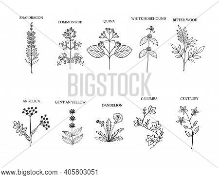 Bitter Herbs Hand Drawn Collection. Doodle Set Of Medicinal Herbs. Plants In Sketch Style, Isolated.
