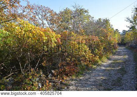 The Autumn Landscape Near Malchina In Friuli-venezia Giulia In North East Italy