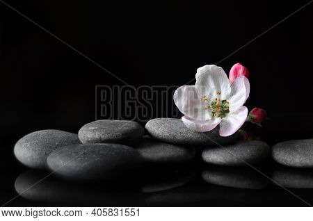 Spa Stones And Pink Flowers On Black Background. Spa Concept.