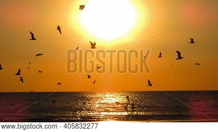 Sunset Silhouette Of A Seabird Sunset.birds On The Background Of The Sun And The Sea.