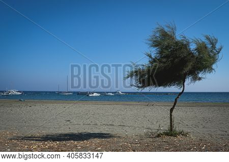 Lonely Tree At The Beach And Small Harbour With Tourist Boats Against Blue Clear Sky. Limassol Cypru
