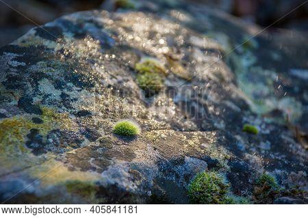 Moss On A Rock In The Autumn Woodland Of The Carso In Trieste Province, Friuli-venezia Giulia, North