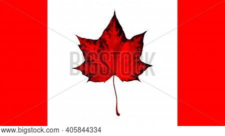 Flag Canada. Maple Red Leaf - Symbol On Canadian Flad Isolated White Background. Patriotic Backgroun