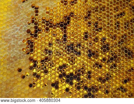 Drop Of Bee Honey Drip From Hexagonal Honeycombs Filled With Golden Nectar. Honeycombs Summer Compos