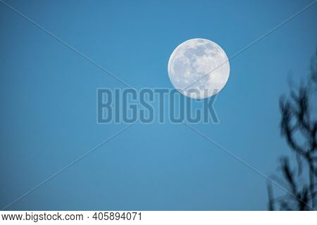 The Full Moon On The Blue Sky With Naked Tree Branches In The Foreground In Winter