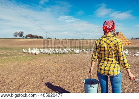 Farmer with her geese on a poultry farm in the country