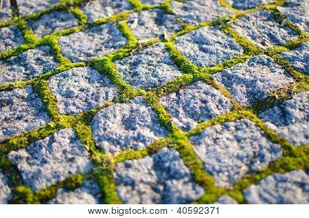 cobblestones with moss