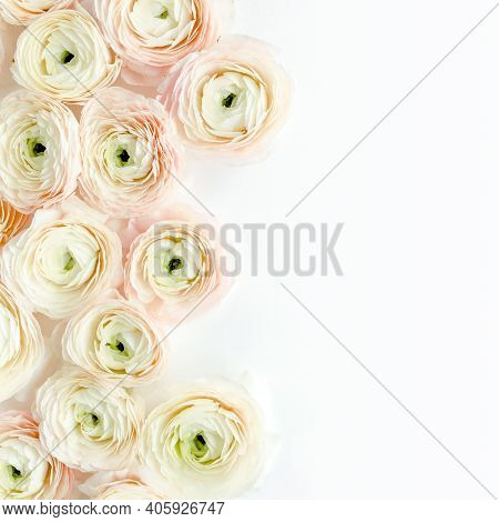 Floral Background Texture Made Of Pink Ranunculus Flower Buds On White Background. Flat Lay, Top Vie